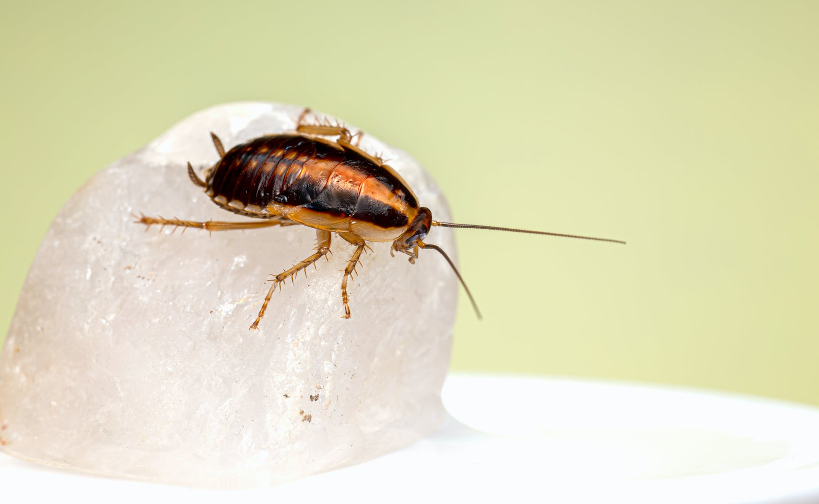 Killing Cockroaches With Bleach: Is It Effective?