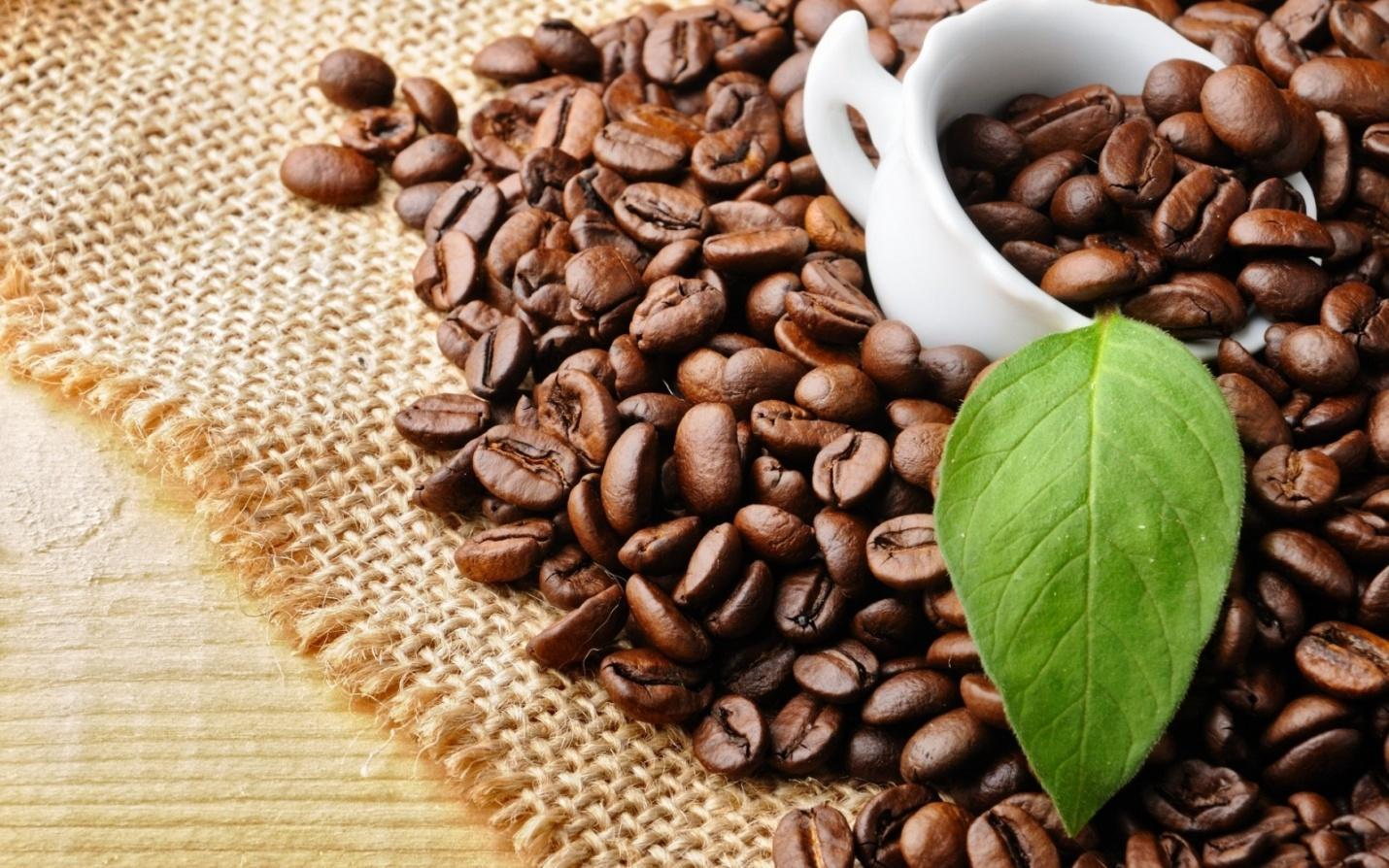 Cafe giá sỉ Motherland lựa chọn hàng đầu cho bạn