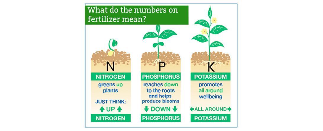 Best nutrients for marijuana growth