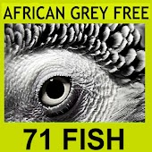 African Grey (Free Remix )