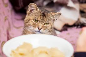 Why should you fatten up your cat