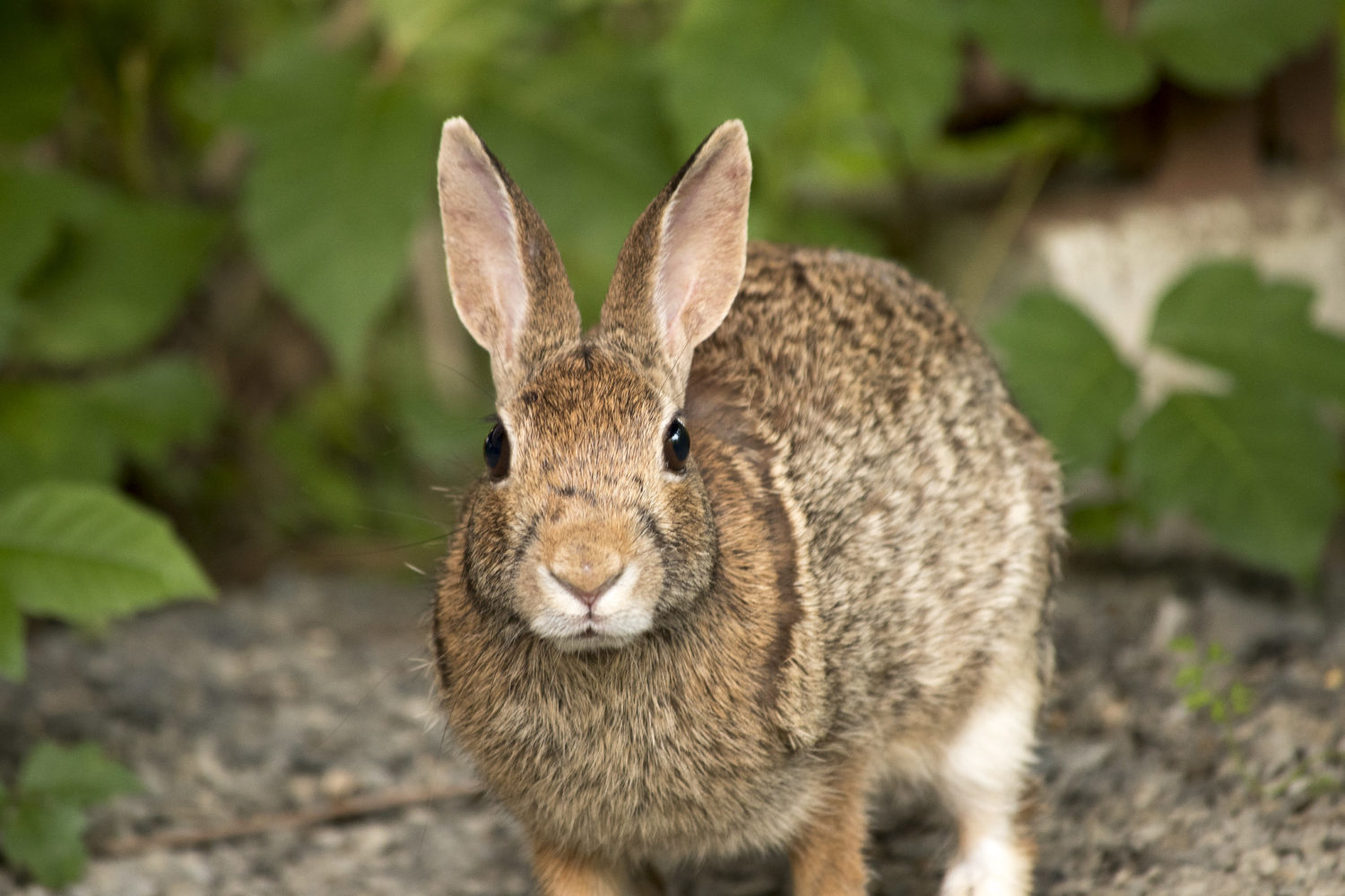 9 Easy Ways to Keep Rabbits Out of Your Garden 1
