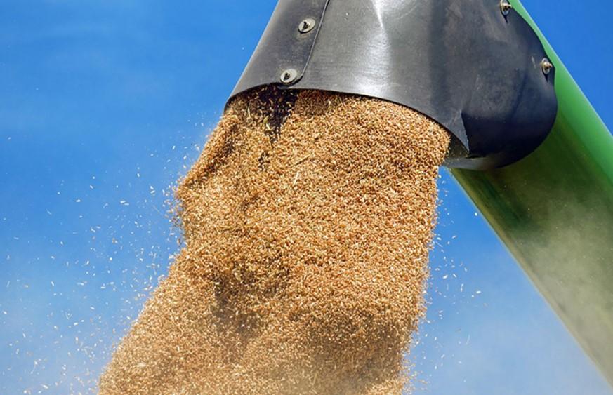 Україна так піклувалась про світову продовольчу безпеку, що з 2021 року сама почала імпорт пшениці (фото з відкритих джерел)