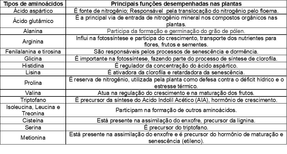 Principais tipos de aminoácidos para plantas