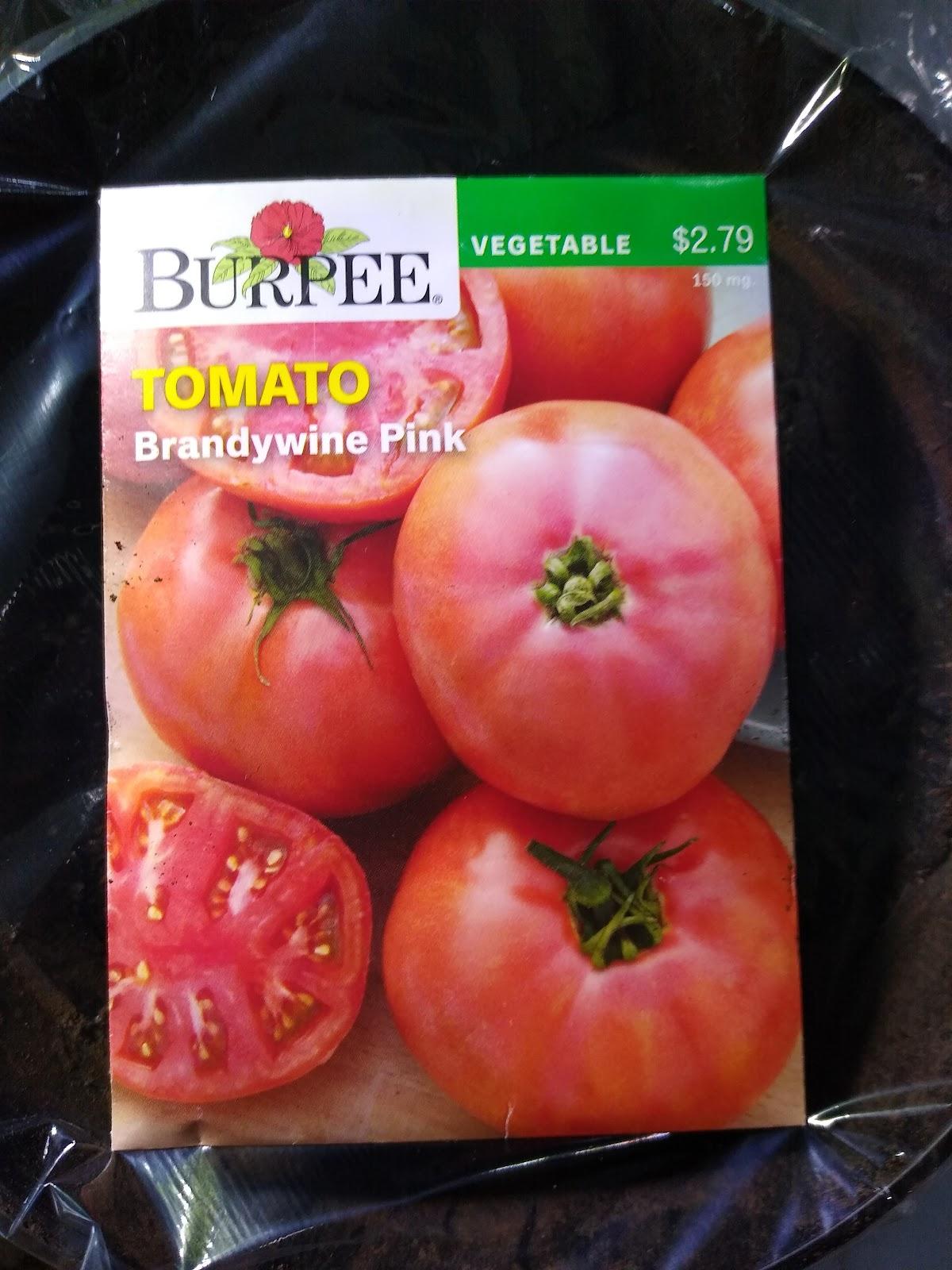 brandywine tomato seeds picture