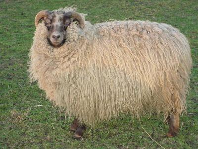 Shetland – The Spinning Loft