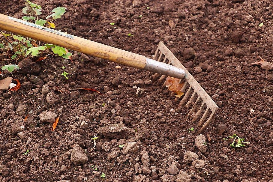 rake-gardening-garden-agriculture.jpg