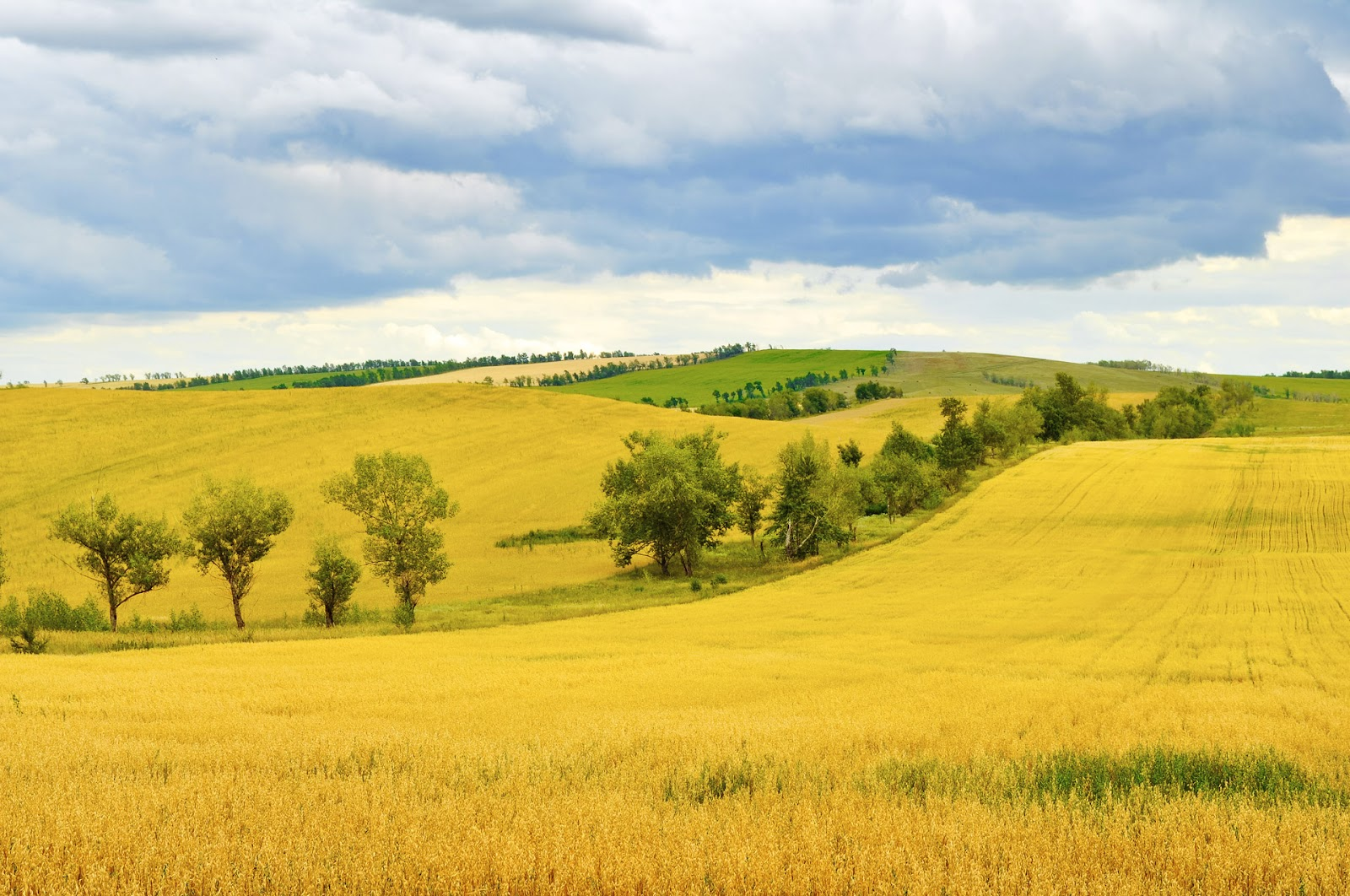 rural-field.jpg