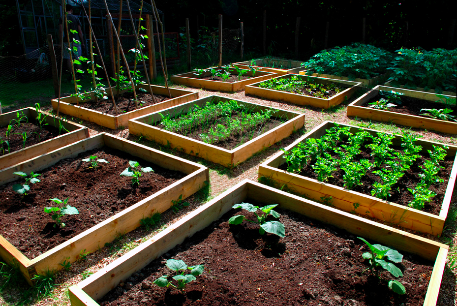 Gardening resources for Veggie patch layout