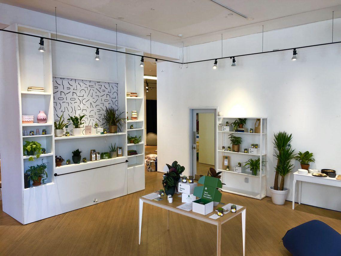 plantas en pop-up store