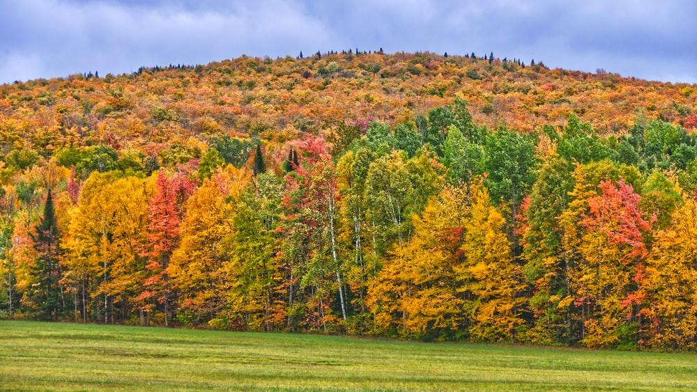 parc national du mont mégantic à l'automne - arbres en couleurs