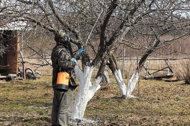 Опрыскивание взрослых деревьев