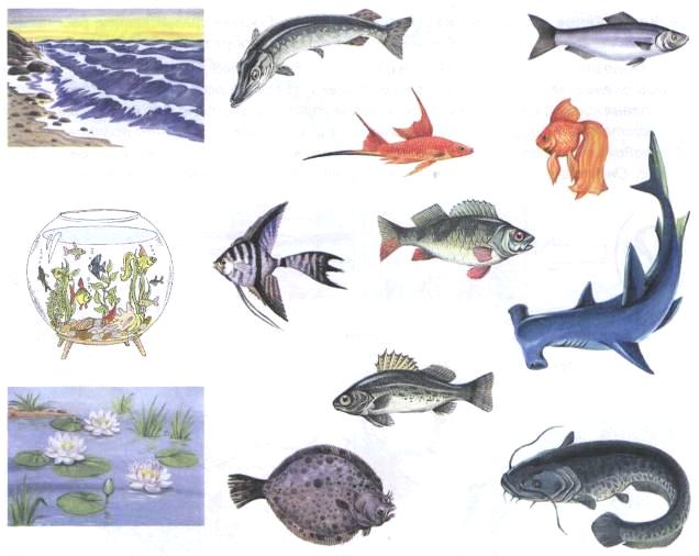 """Домашнее задание """"Рыбы"""" - Дошкольное образование - Дошкольникам"""