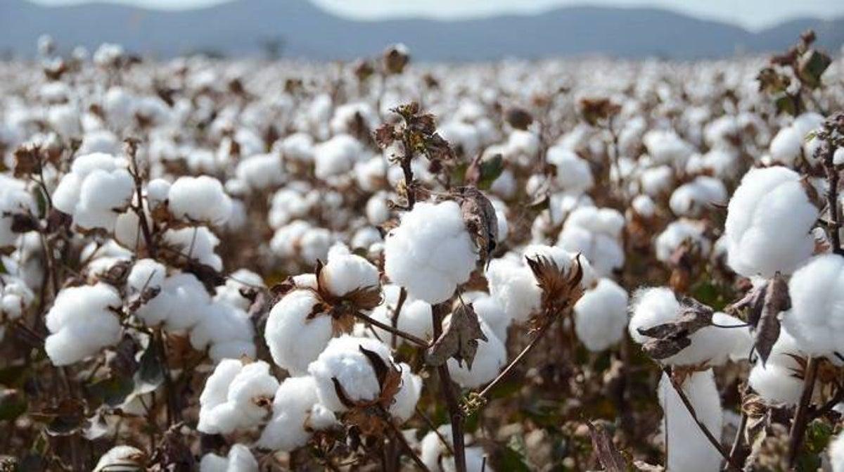 vai-cotton-la-vai-gi-nhung-dieu-ban-can-biet-ve-vai-cotton