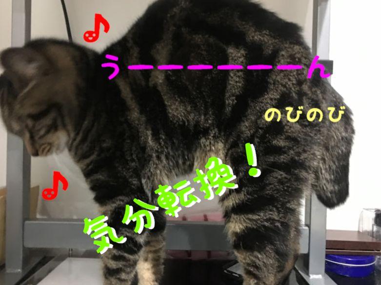 猫好き必読!癒されるおすすめの猫の本3選