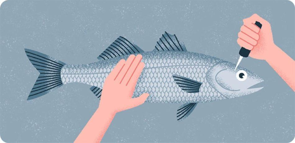 What is the Quickest Most Ethical Way of Killing a Fish – MyWaterEarth&Sky