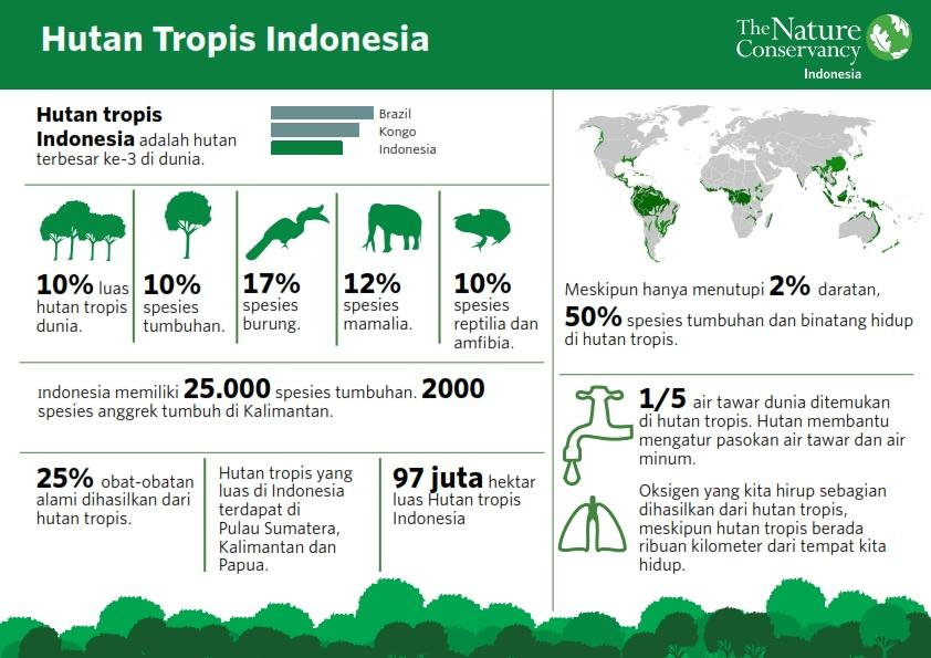 https://3.bp.blogspot.com/-0oqM_iSOe8E/V5wyz1BvSwI/AAAAAAAAAxY/gcqUt-LoA0kmHDLGYK5fJT7BtsAh5qifACEw/s1600/hutan-indonesia-1_001.jpg