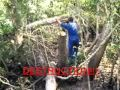 Video for destruction of mangrove sundarbans