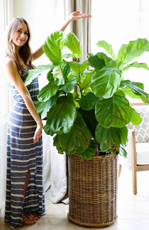 A person holding a potted plant  Description automatically generated with medium confidence