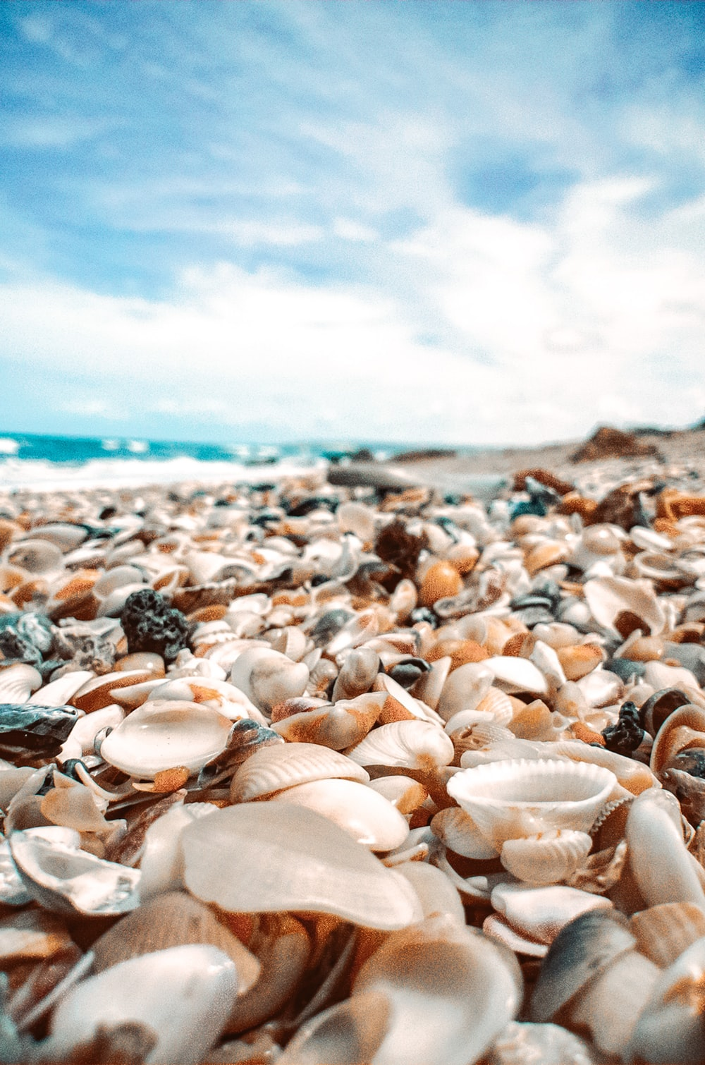 white and brown seashells on beach shore during daytime