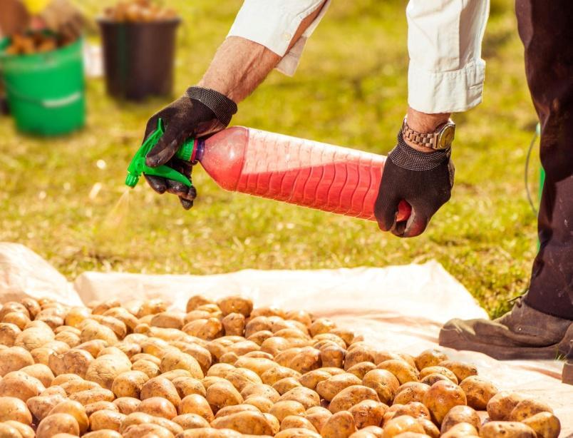 протравители картофеля перед посадкой