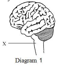 Which activity is controlled by X?  Aktiviti yang manakah dikawal oleh X?
