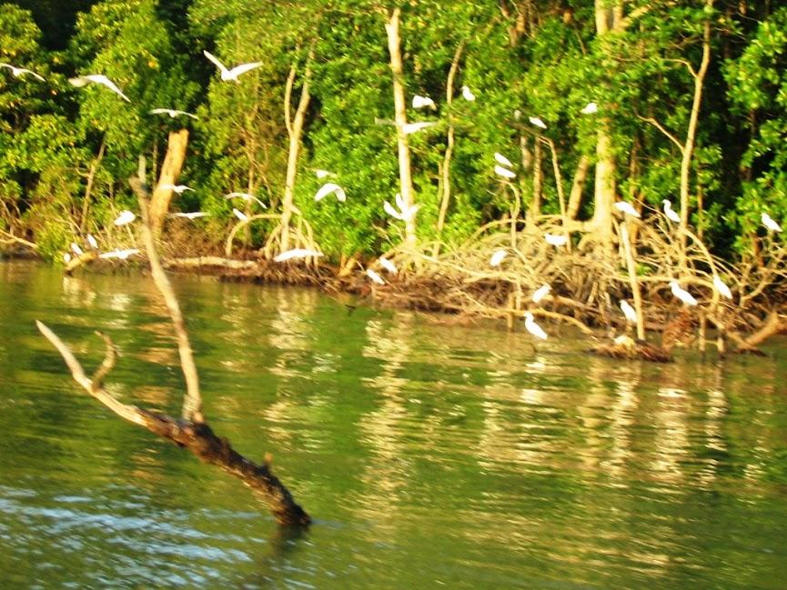 20061224Kuala Gula 之旅 172.jpg