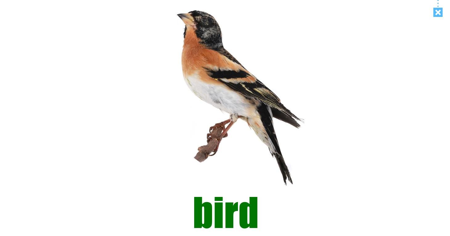 bird trong phần mềm monkey junior, chương trình học tiếng anh cho bé