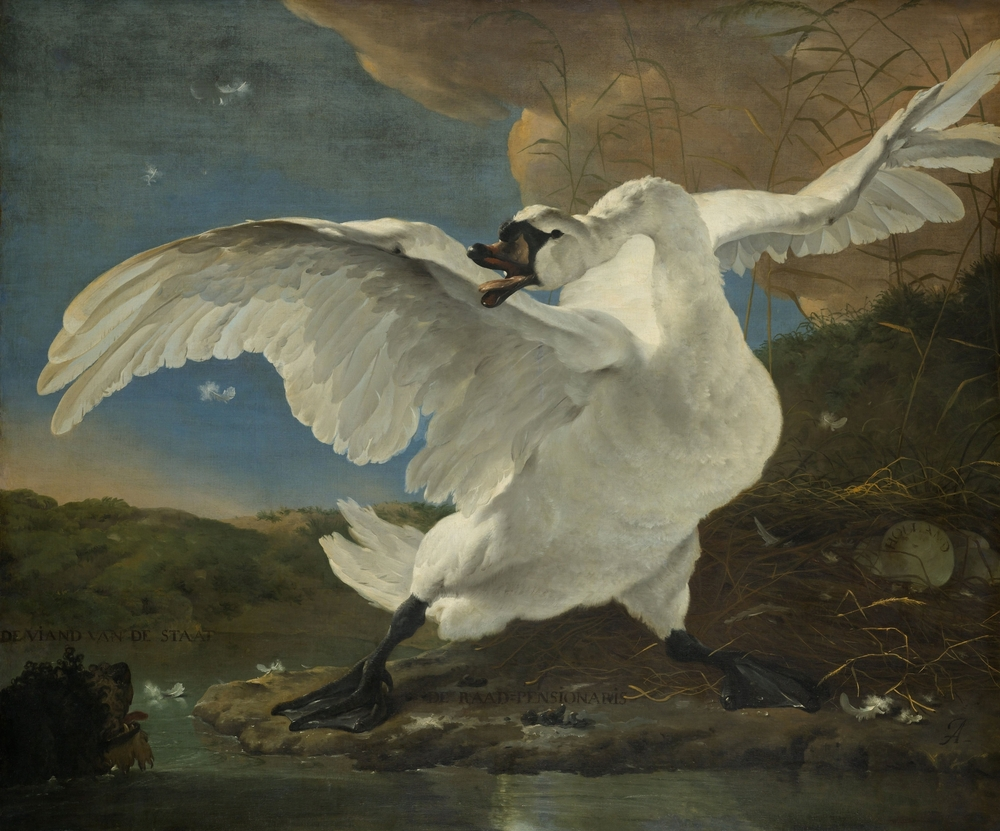 One of the Risjkmuseum highlights –is undoubtedly Threatened Swan by Jan Asselijn.