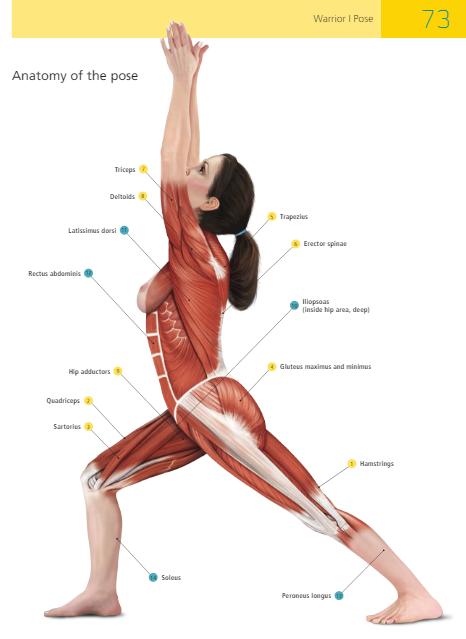 sally-parkes-students-manual-yoga-anatomy-warrior-1