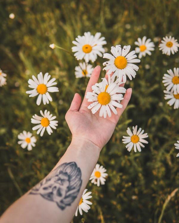 Uma mão segurando umas flores e uma tatuagem de um leão no antebraço.