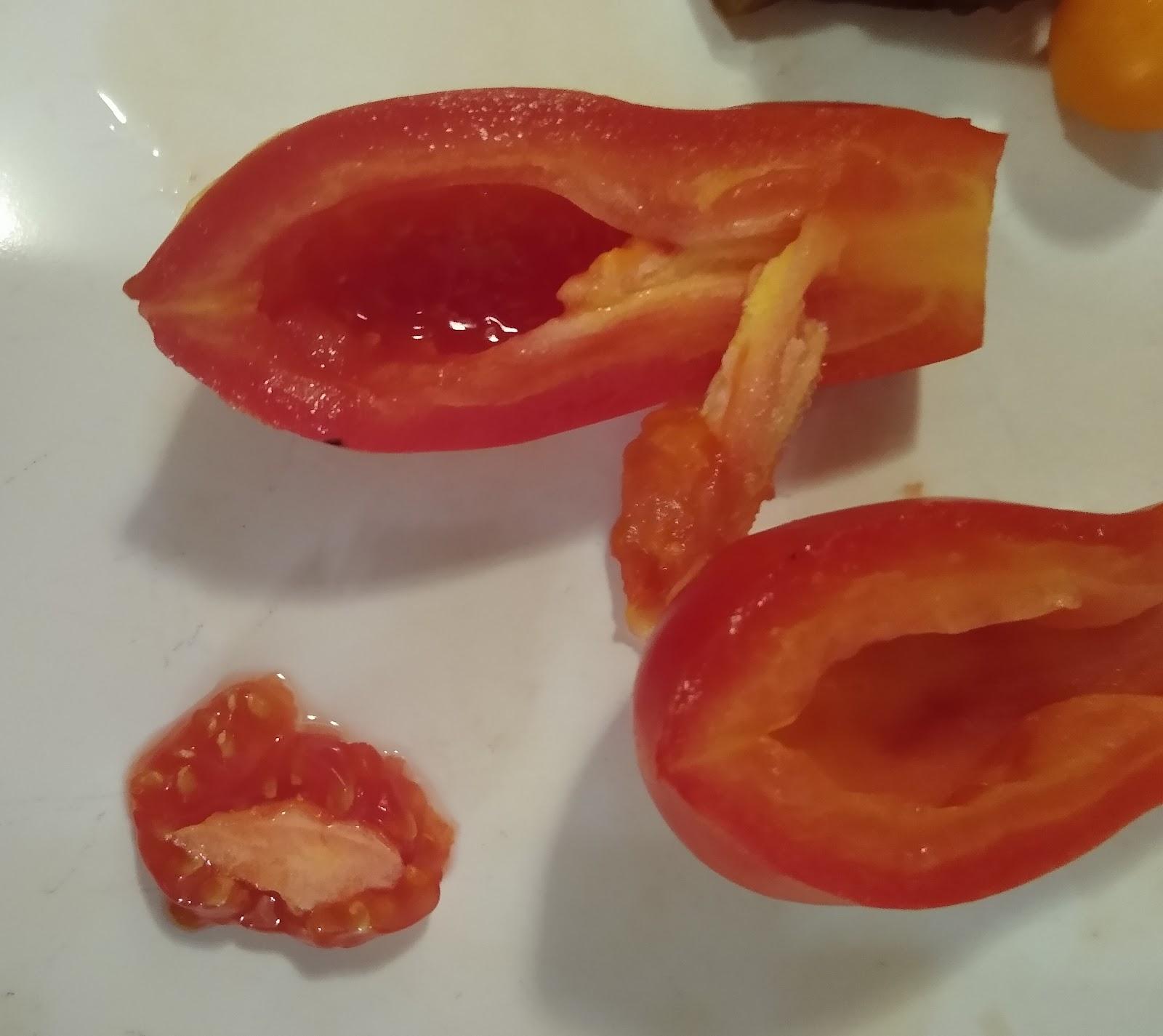 harvesting san marzano tomato seeds picture