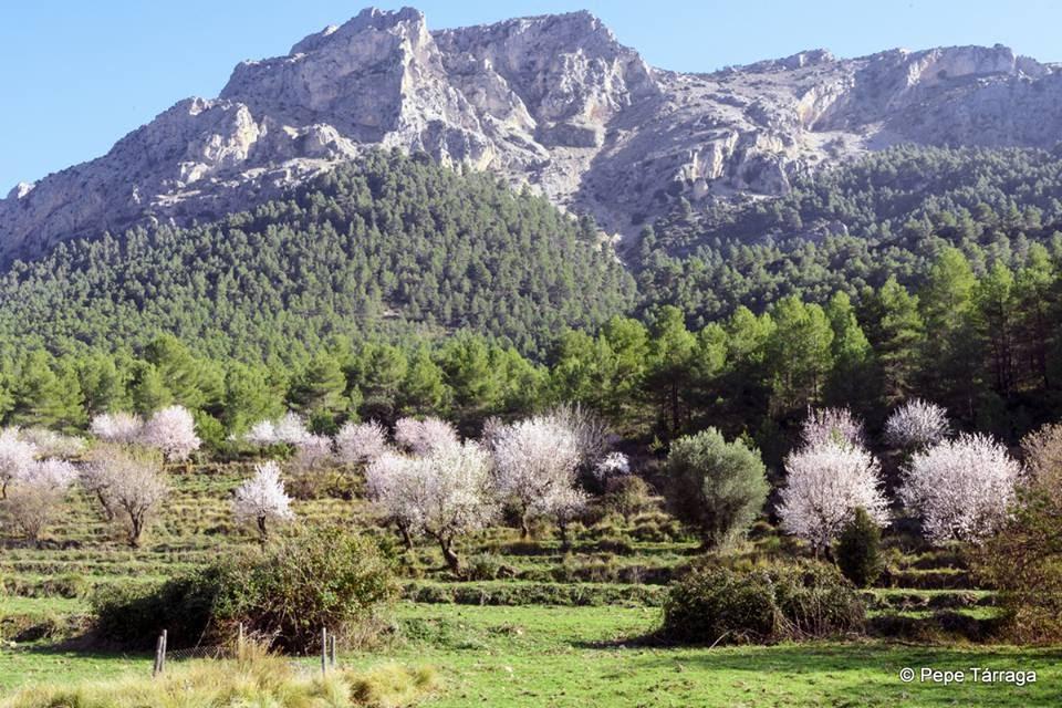 La imagen puede contener: montaña, árbol, cielo, planta, hierba, exterior y naturaleza