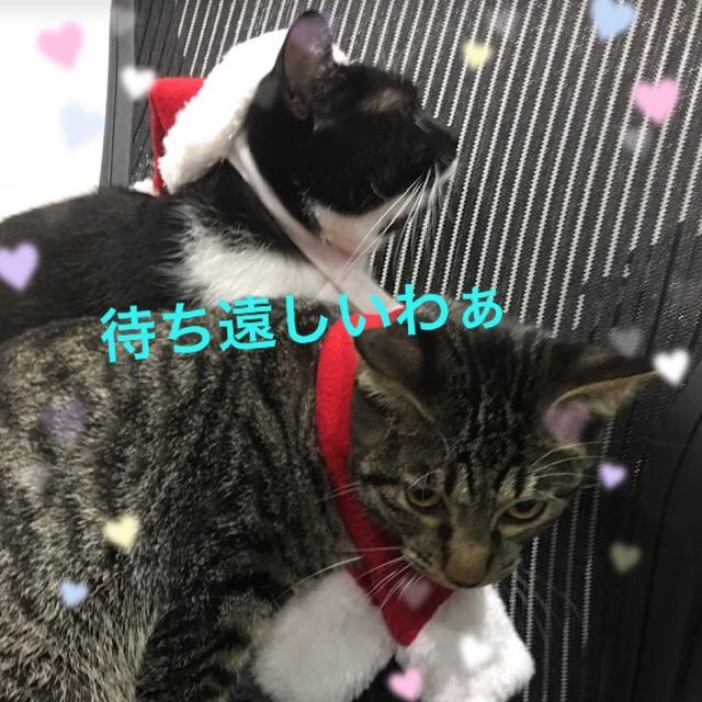 猫は生クリームが大好き?犬と猫用のクリスマス・誕生日ケーキが可愛い