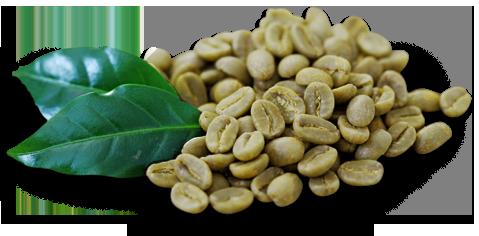 Семена кофе.png