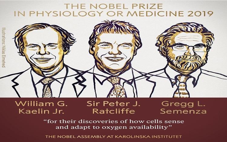 Image result for nobel prize in medicine