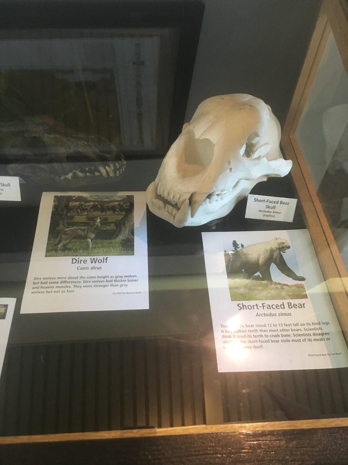 Waco Mammoth Cave History - The Happy Mustard Seed