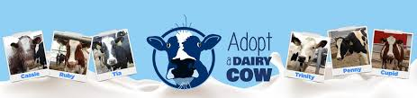 Adopt-A-Dairy-Cow - Second Harvest Foodbank of Southern Wisconsin