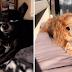 Novo filtro do Snapchat deixa seu animal de estimação com cara de personagem da Disney!