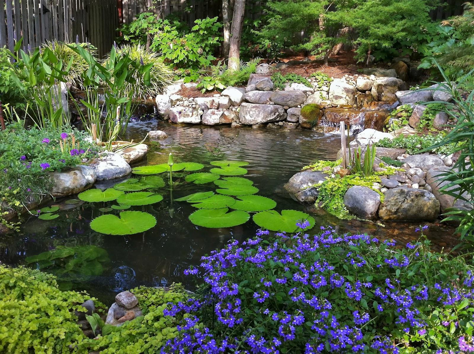Inspirasi penggunaan fitur kolam pada Zen Garden - source: alabamaaquarium.com