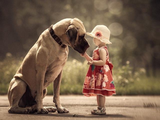 Nhớ chính xác giấc mơ thấy chó bạn sẽ tìm được những con số tương ứng