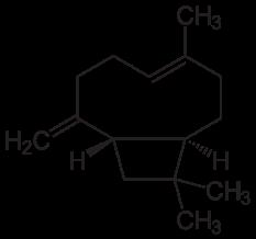 233px-Beta-Caryophyllen.svg.png