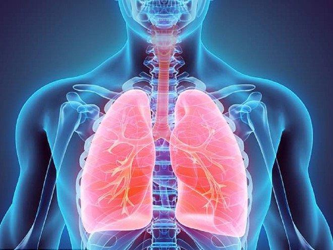 Hình ảnh lá phổi