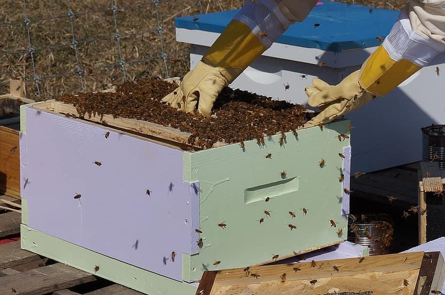 إنتاج العسل