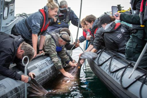 10 questions with a marine mammal rescue expert   Cottage Life