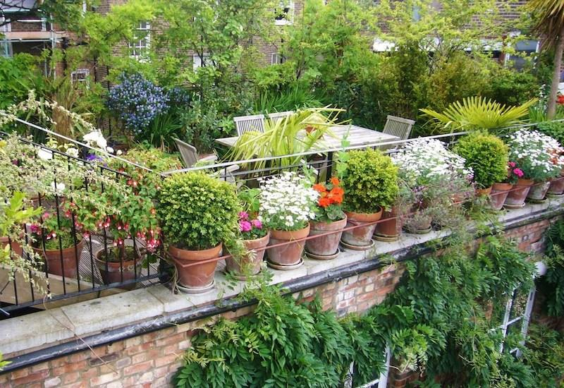 Image result for Plant A Small Garden