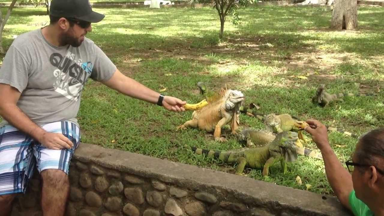 """Image result for """"Iguana Park in costa rica"""