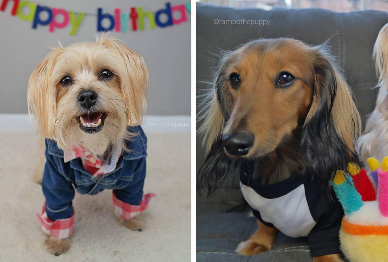 dog birthday party ideas dress to impress
