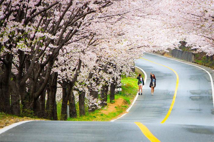 Khám phá sức hấp dẫn khó cưỡng của 4 mùa ở Hàn Quốc