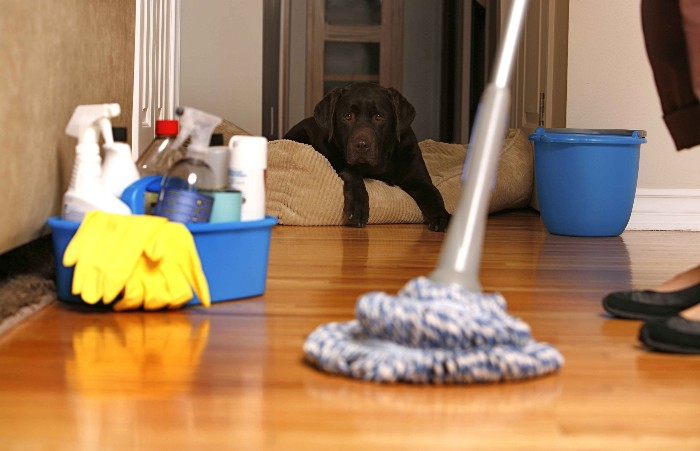 House Cleaning Tips to Keep Your Home Clean with Pets
